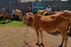 Qurbani - Qurbani Large Animal/Small Animal - Sacrifices Animal for Qurbani - Help Poor